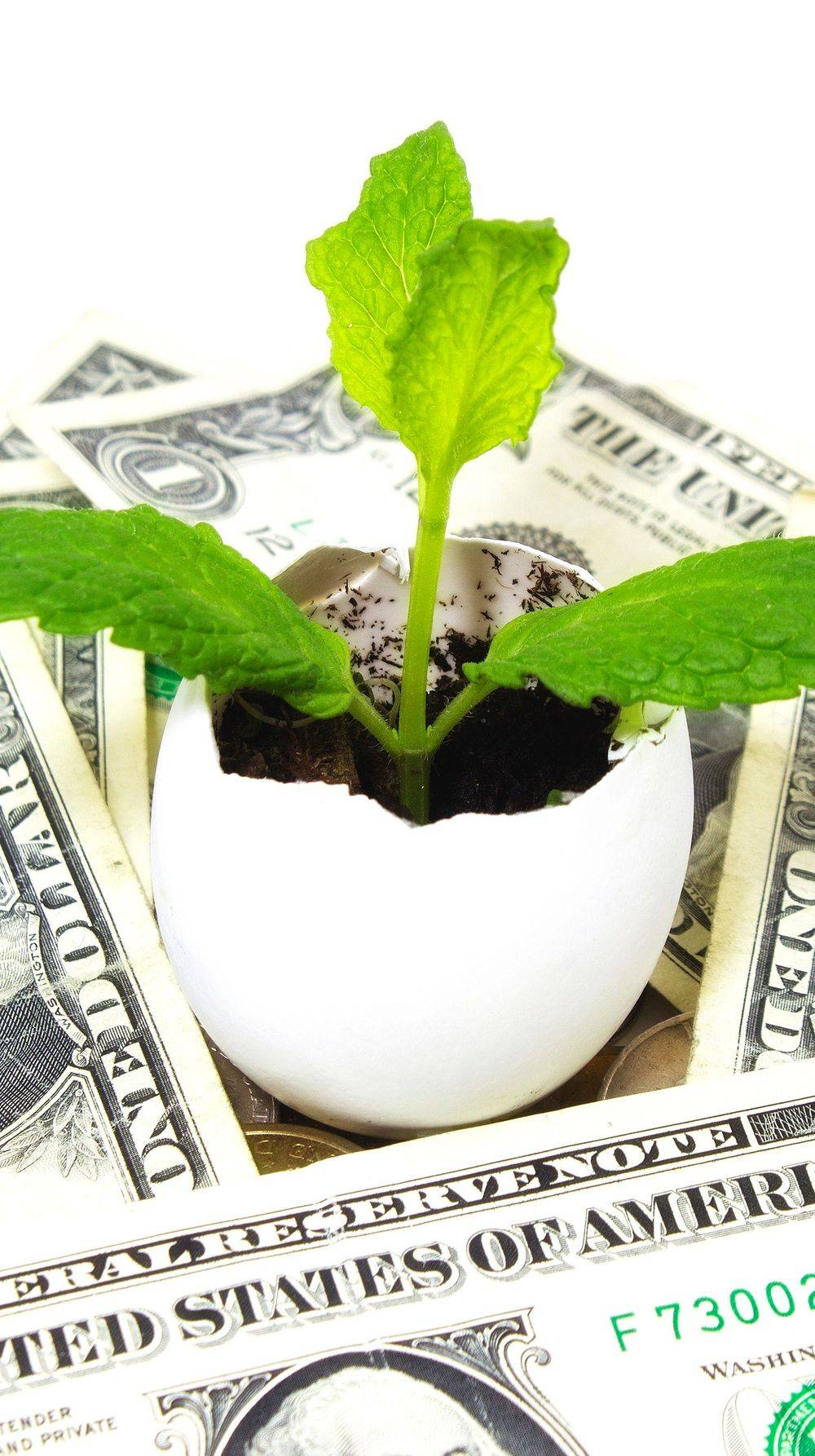 landscaping costs, landscaping budget