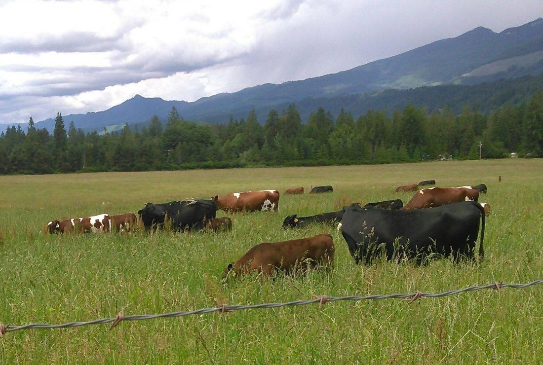 North Cascades, log cabins, Mt. Baker