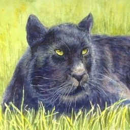 panther watercolour painting by Marcia Kuperberg