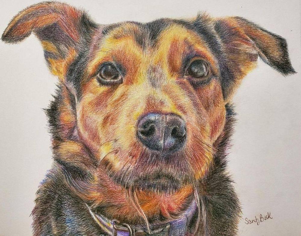 pet, pet portrait, dog, dog portrait, pet art, sandy bock