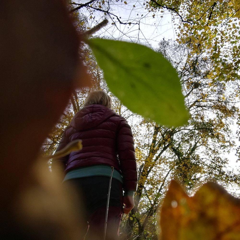 Heike Otto Blätter Blatt Natur Waldbaden