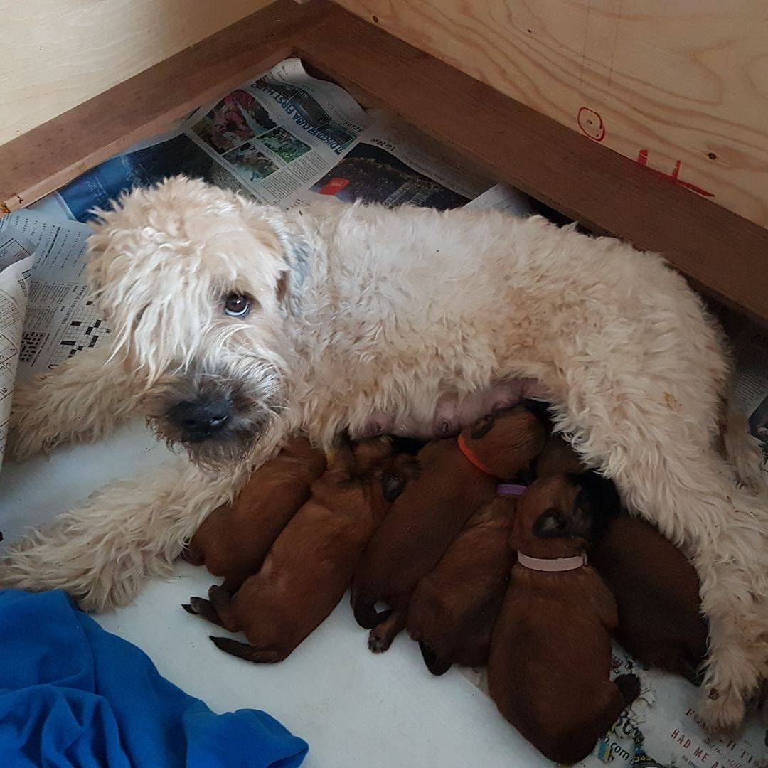 Pepper Nursing Babies