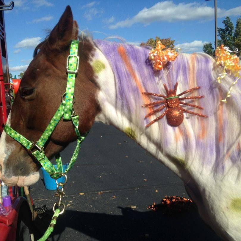 Horse decorated for Halloween