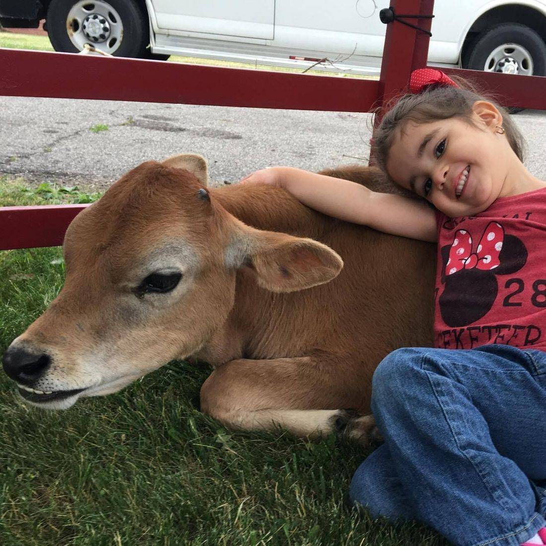Little girl laying down with a calf