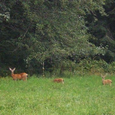 Wildlife at Ovenell's Heritage Inn