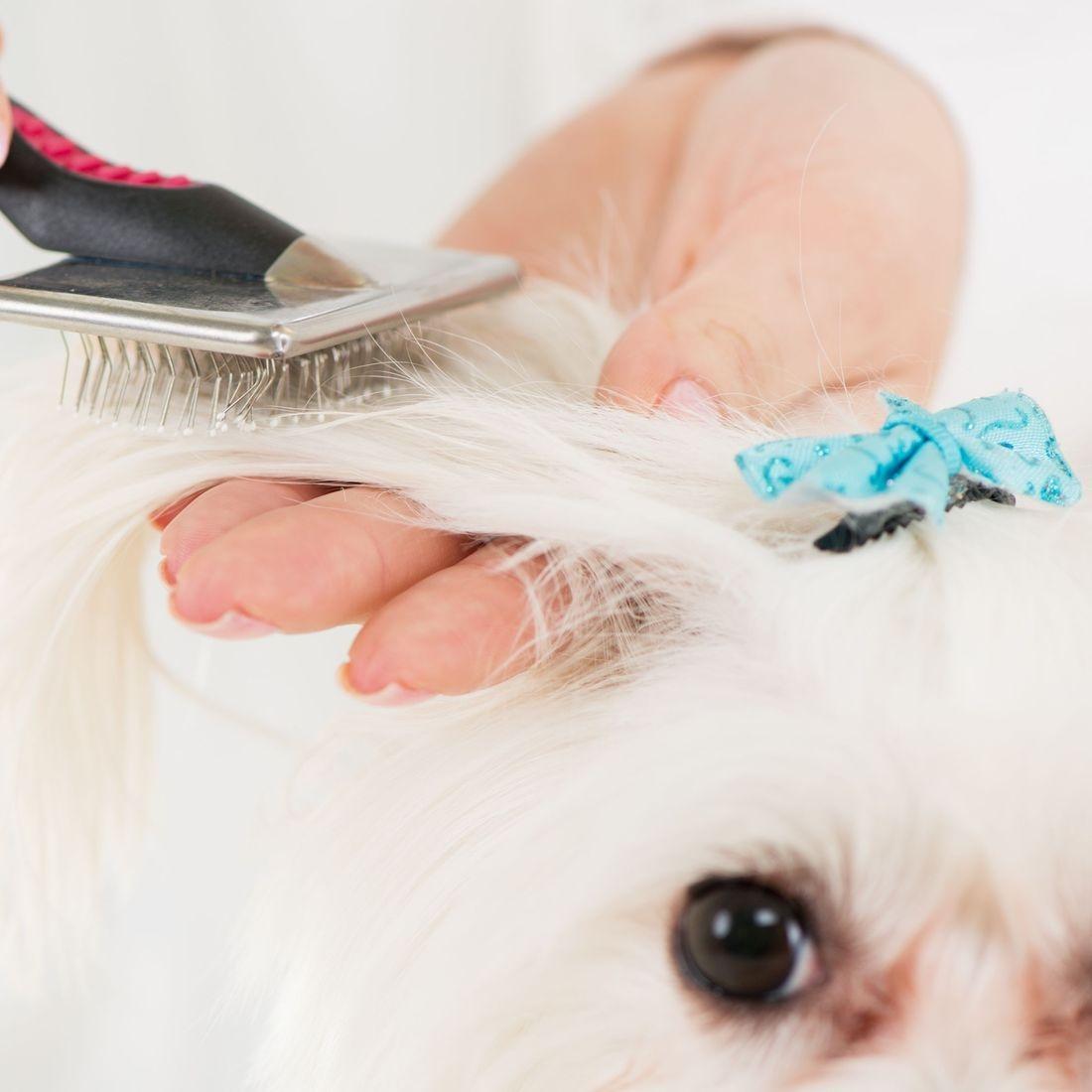 pupazzo dog grooming