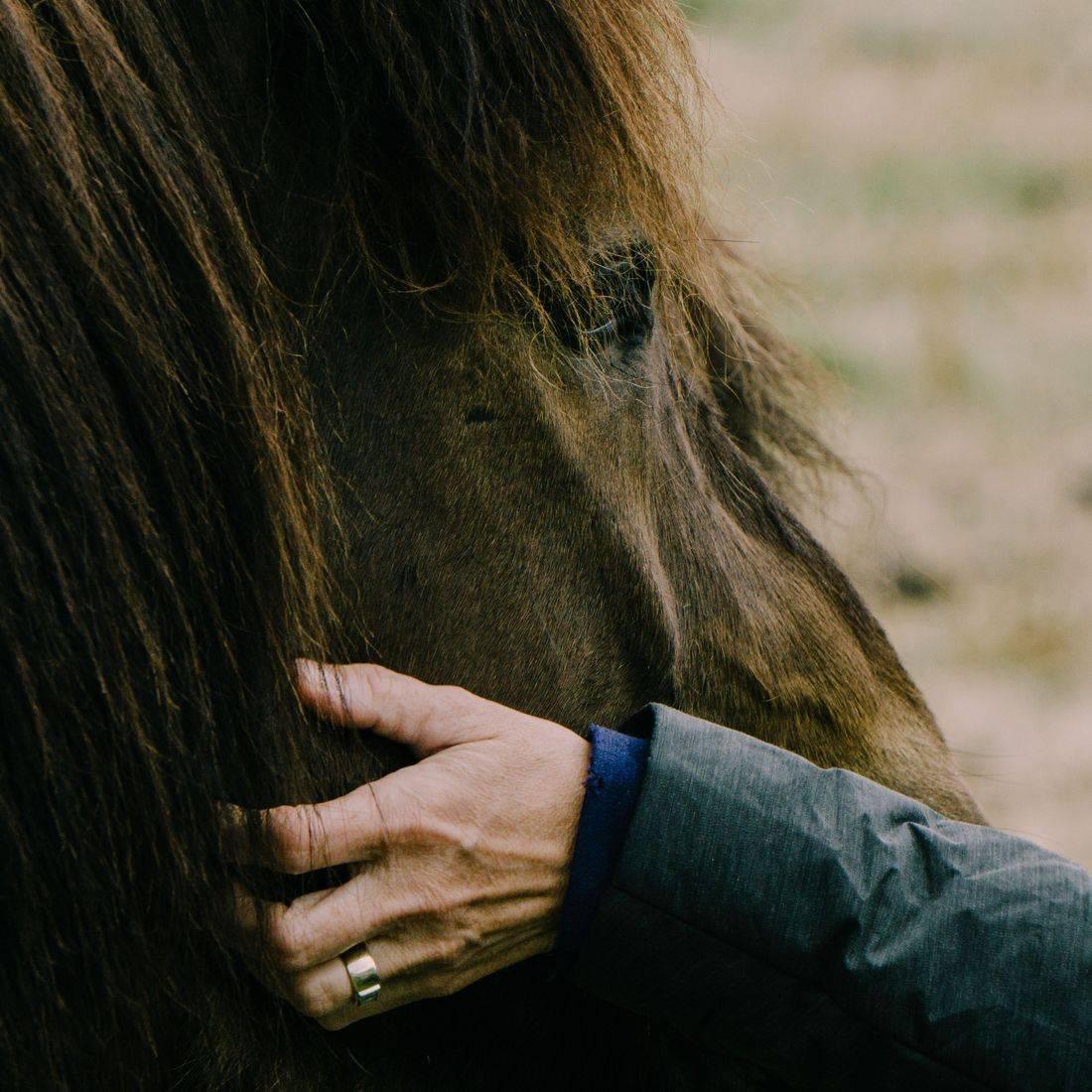 potomac horse center capital campaign