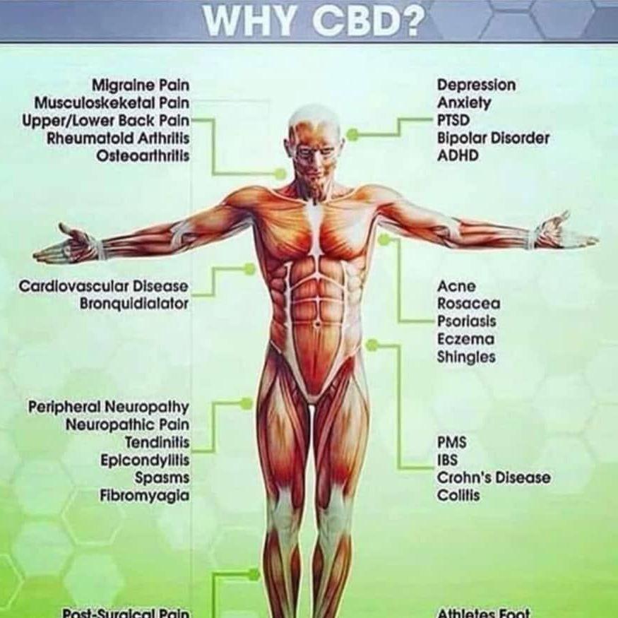 Why CBD?