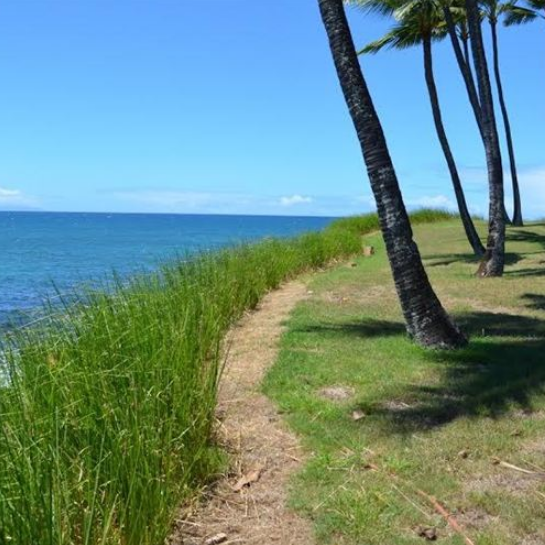 Maui Shoreline Protection