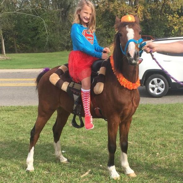 chamberlin pony rides, haflinger rides