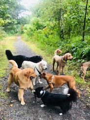 waltham dog walkers