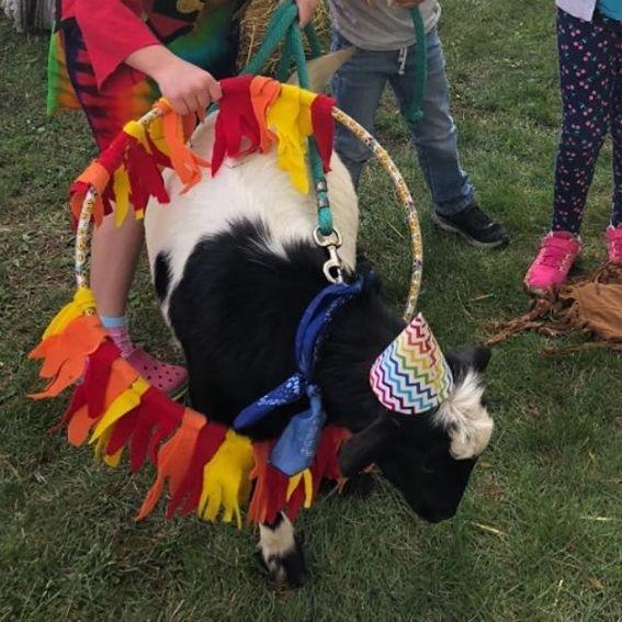 alpaca wearing a butterfly costume