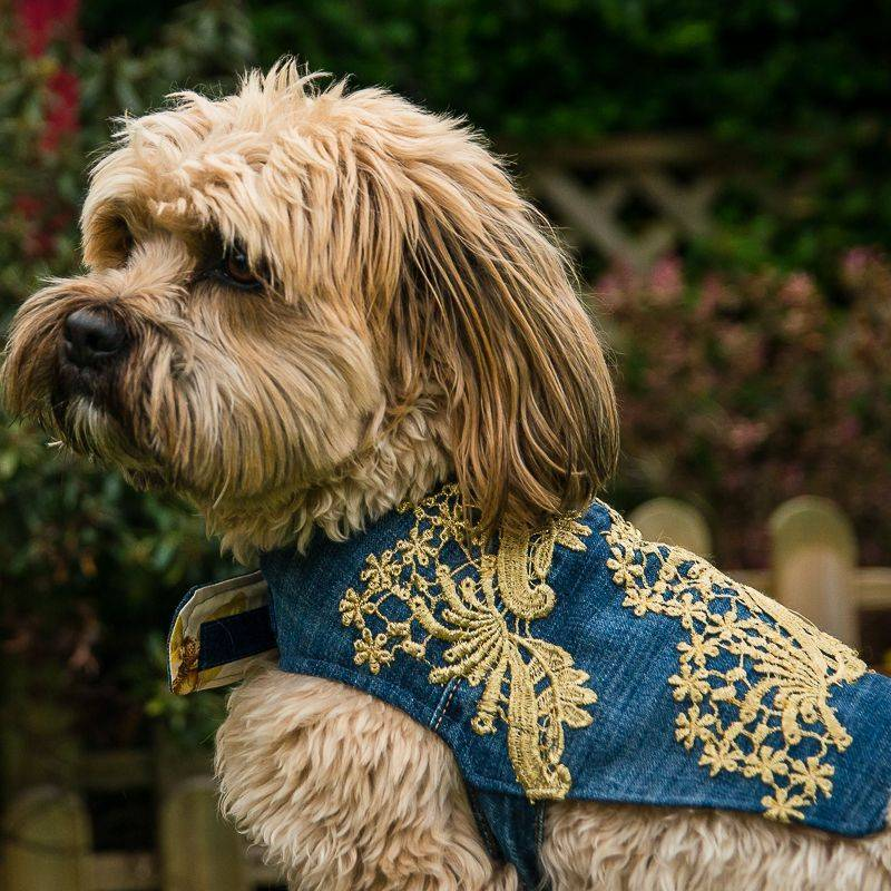 doggy dress coat vest