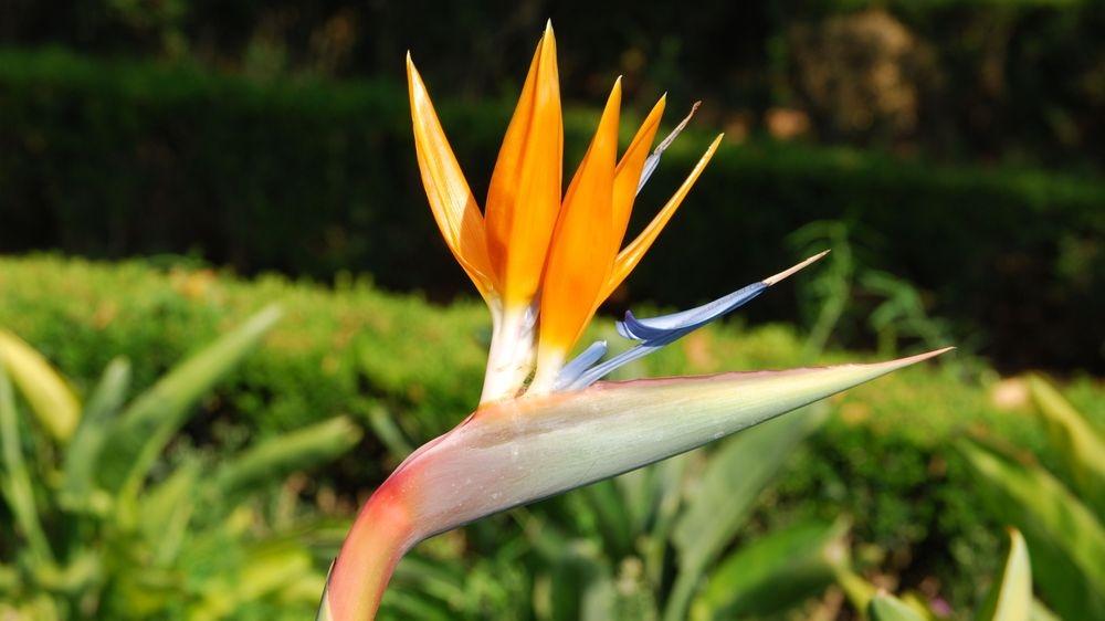 Elixirs floraux des Andes