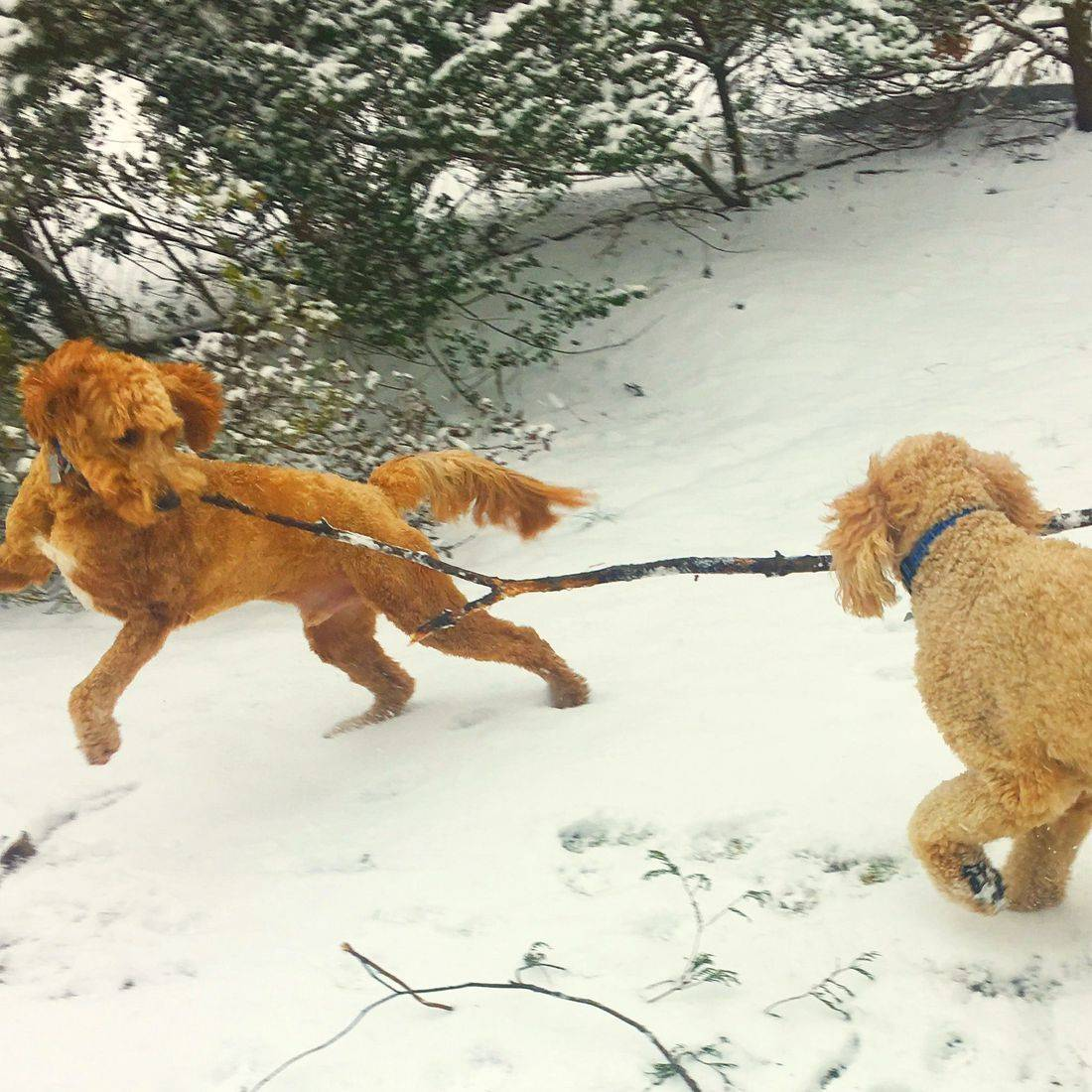 Photo of two dogs playing in the snow