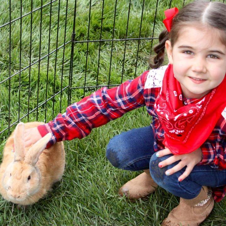 Girl and rabbit in petting zoo