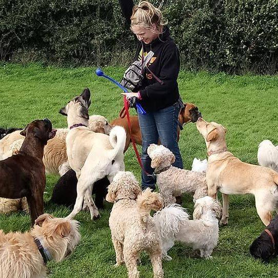 Tails of Tranquility, dog day care, puppy creche, newton mearns, glasgow, puppy, doggy