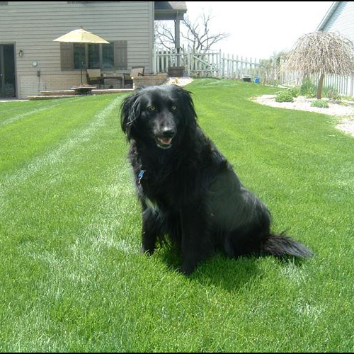 """pet friendly lawn care"", ""natural lawn care"", ""safe lawn care"""