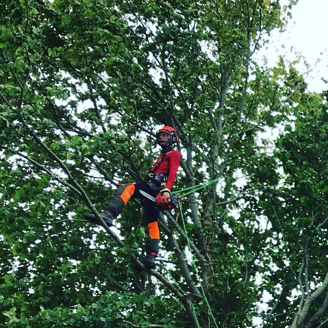 Tree Surgeon Bideford