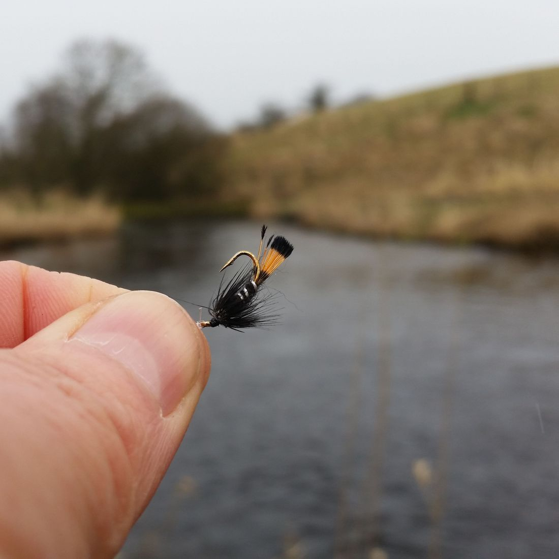 walton  black pennell trout fly