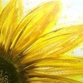 Burst of Sunflower
