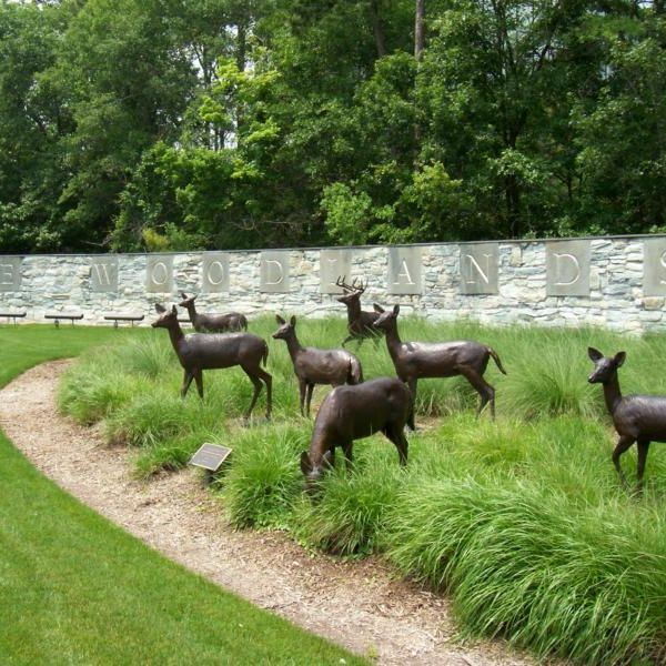 deer in grass, letters on wall of the Woodlands, nature,