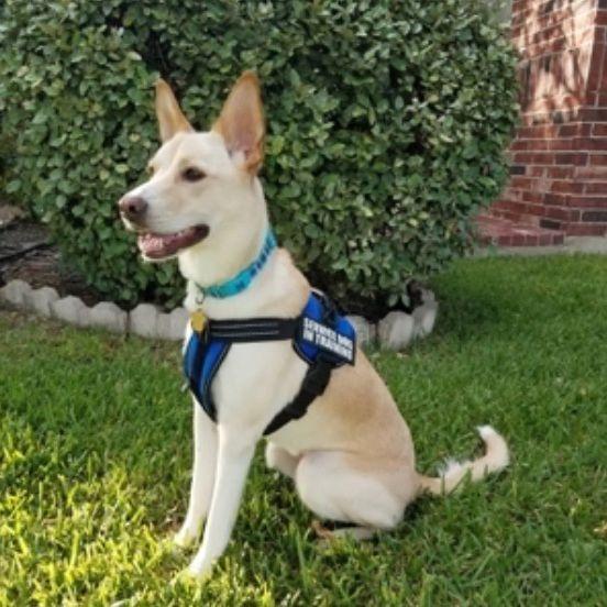 Dog Training Water training