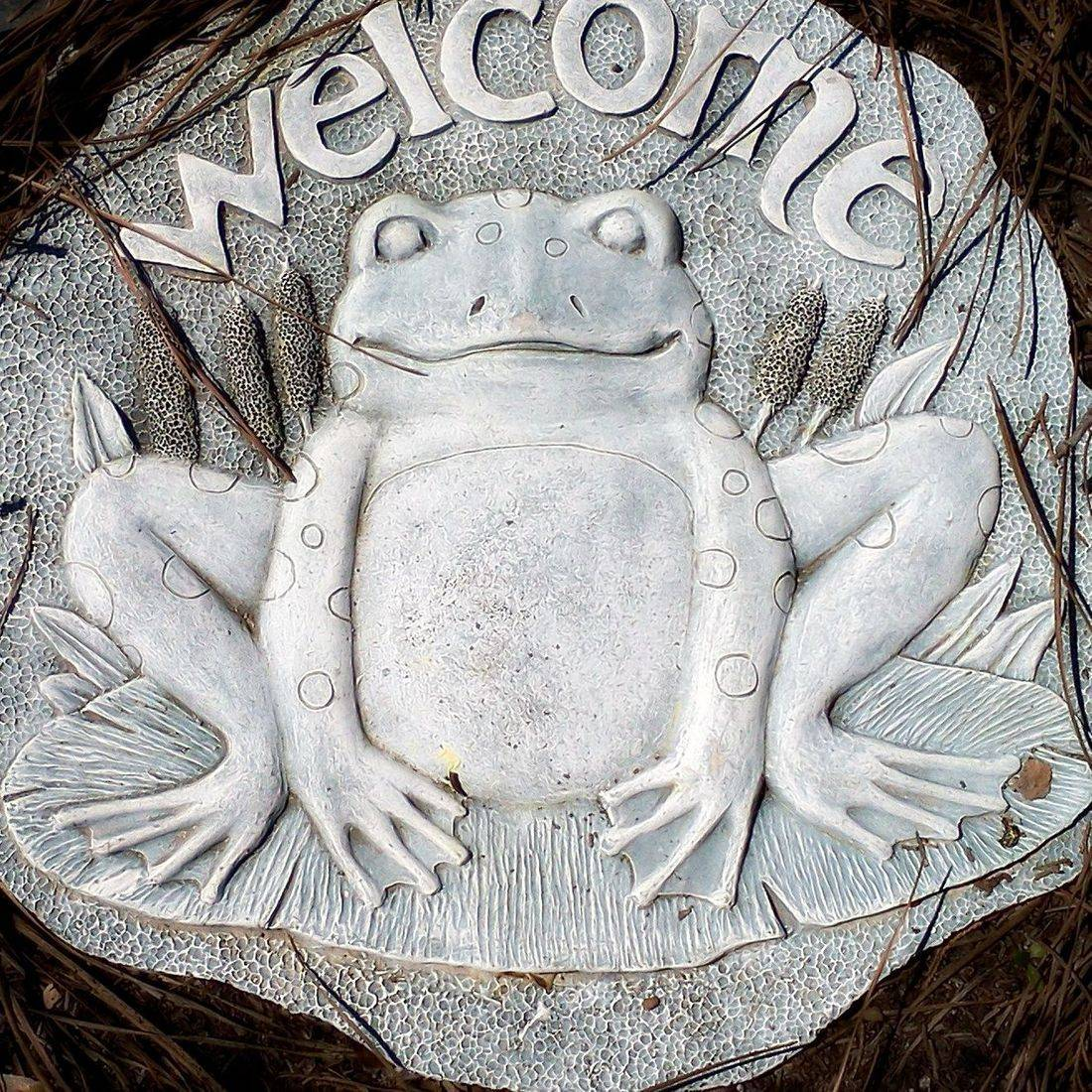 Welcome, Frog, Stone, Pine