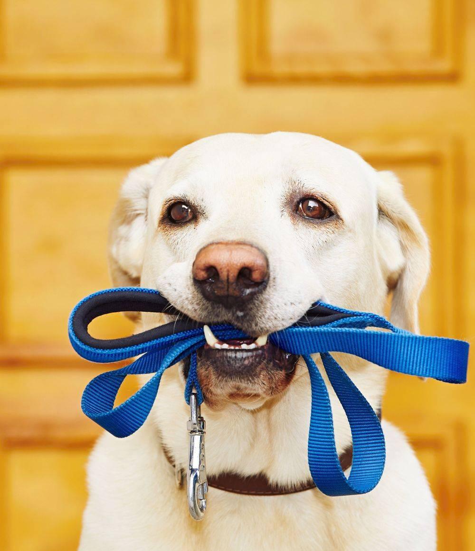 Dog Walker Watertown, MA