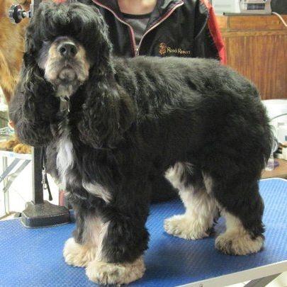 dog grooming appleton Kimberly Wi Details pet groomer appleton