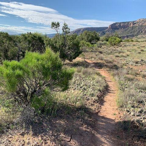 red bike trail therapy,  anxiety, red bike counseling, trauma, wildwood trail head, corkscrew trail, emdr