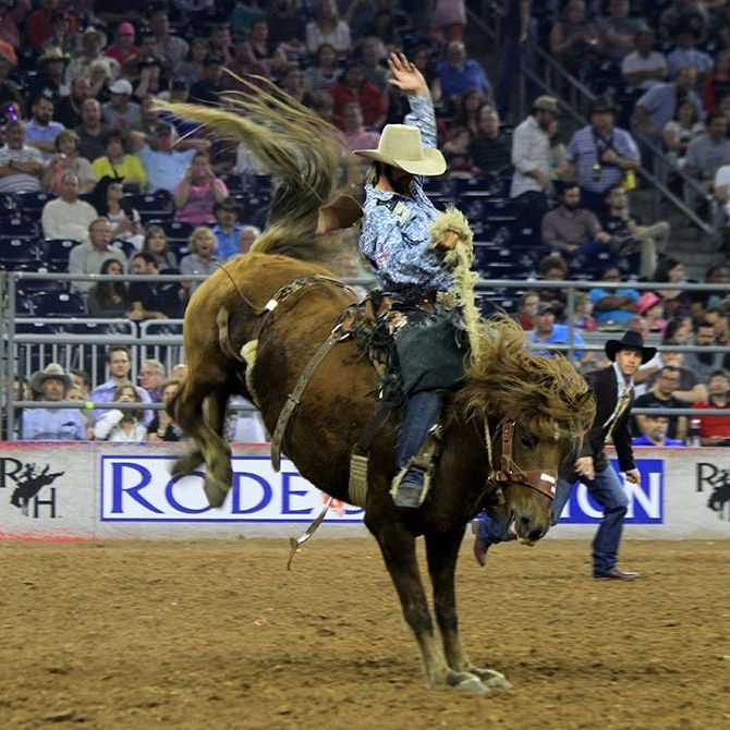 image of a saddle bronc rider at the Houston Livestock Show and Rodeo