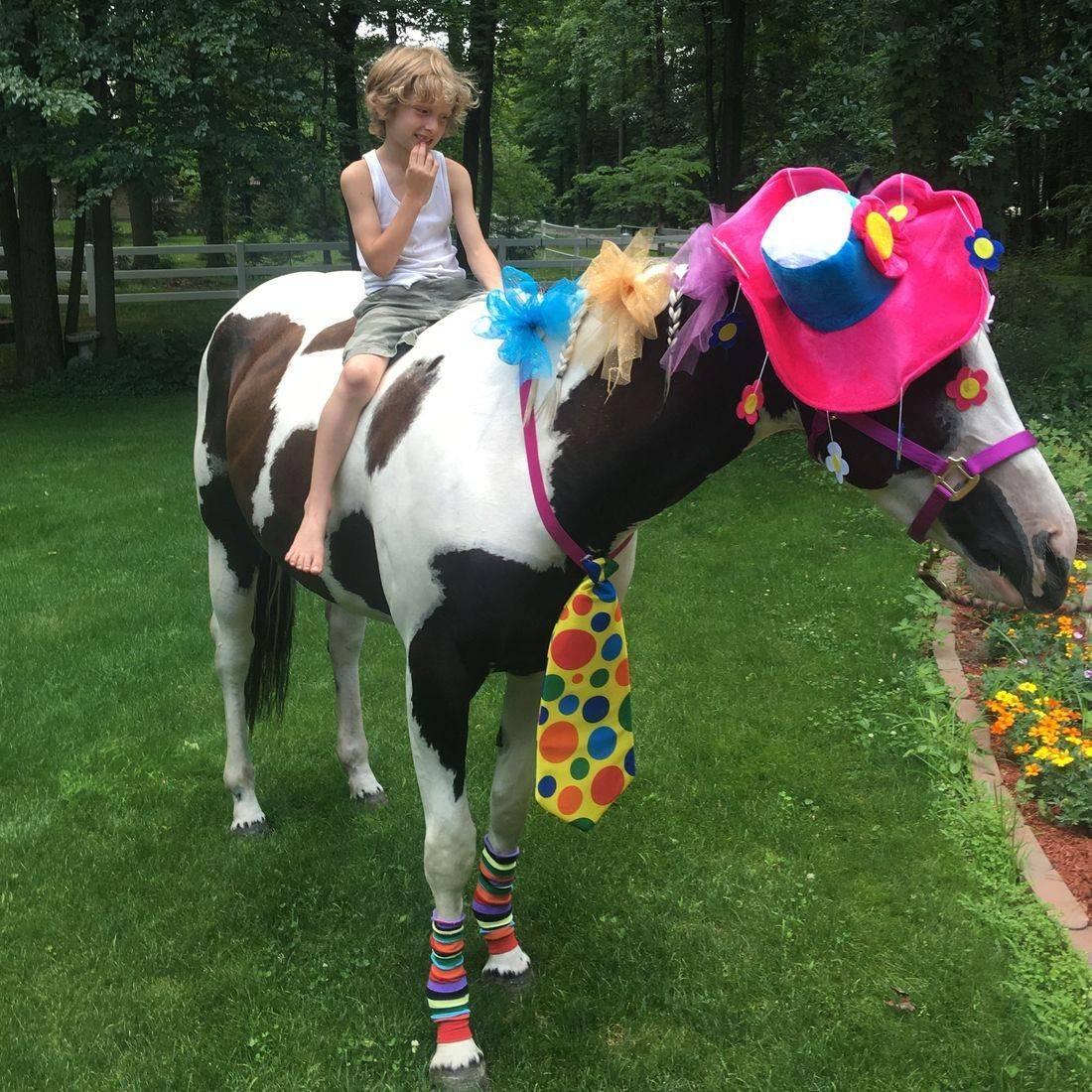 Clown horse