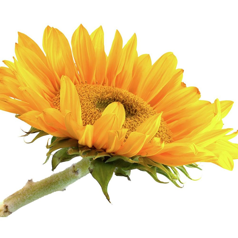 Make flowers on a rod for indoor or outdoor gardens & pots. Pick-up on Feb 24.
