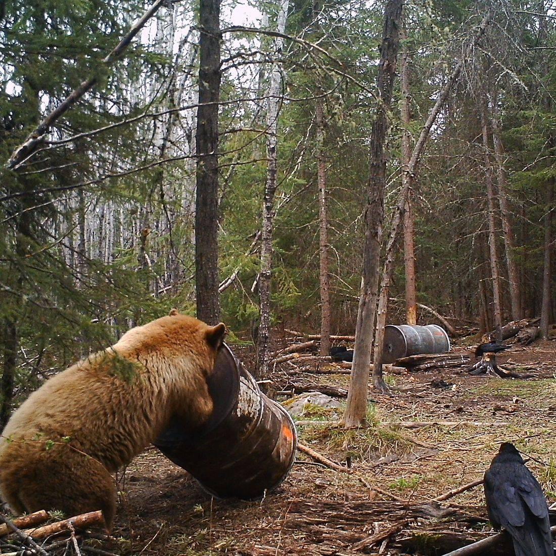 Hunting, Lodge, Manitoba, Canada, bear hunting