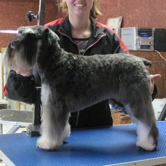 dog grooming appleton detailsKimberly Wi Details pet groomer appleton