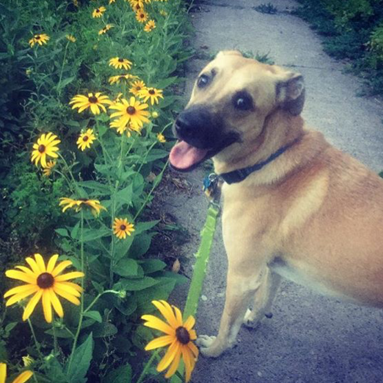 Photo of a smiling dog outside next to yellow flowers