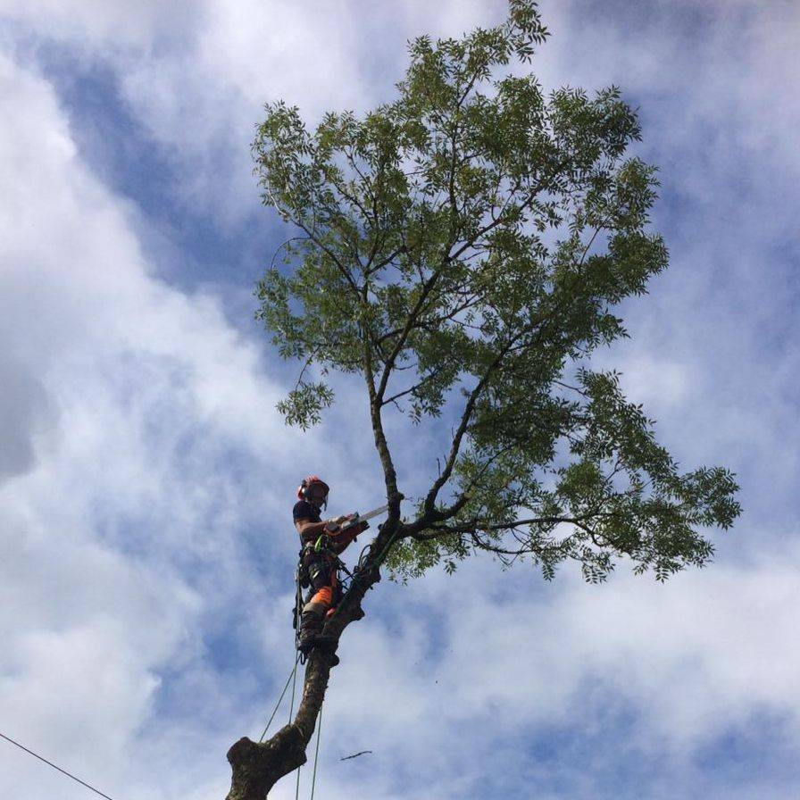 Tree Surgeon Torringotn