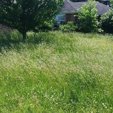 Columbia, SC Professional Mosquito Lawn Treatment