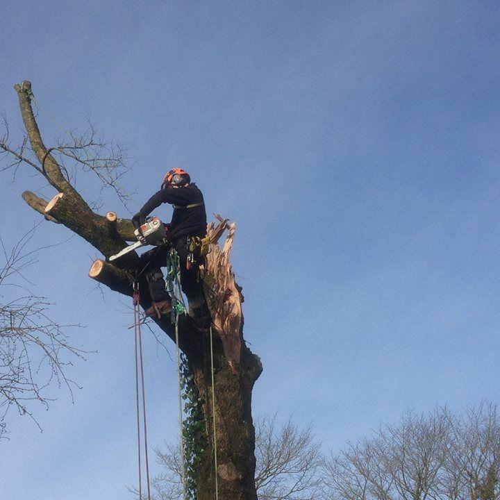 Dave cutting tree