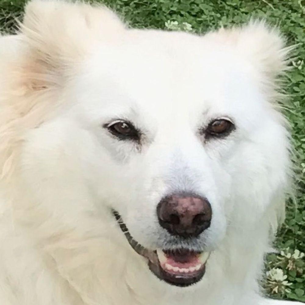 Marion Höft Hundetrainerin