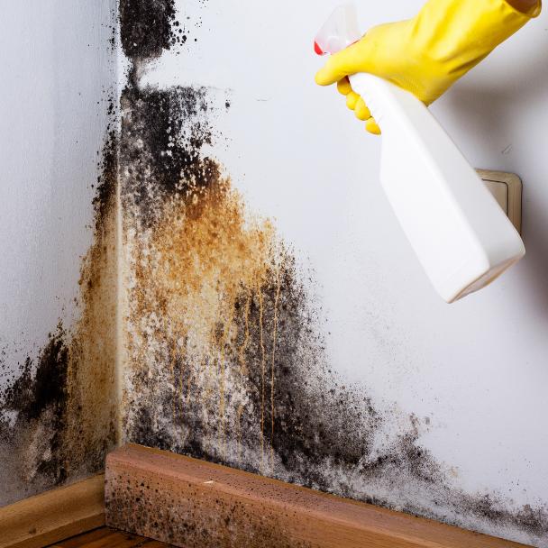 mold inspection san francisco