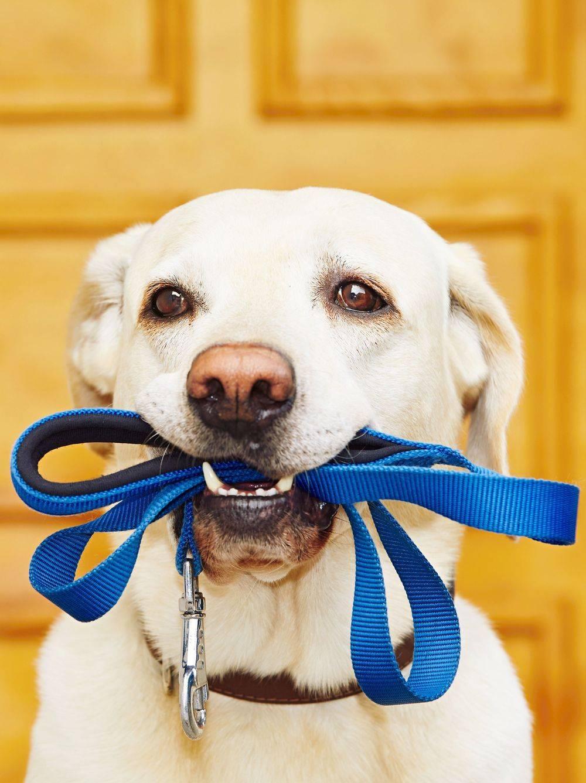 Dog Walker Newton, MA