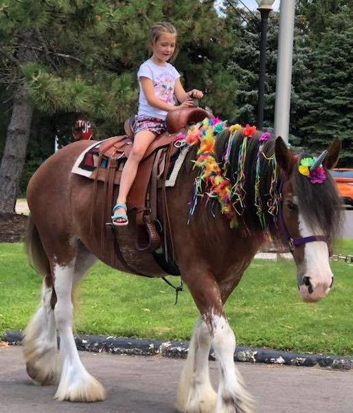 LITTLE girl riding a giant Clydesdale  horse