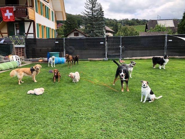 Anforderung an Hunde