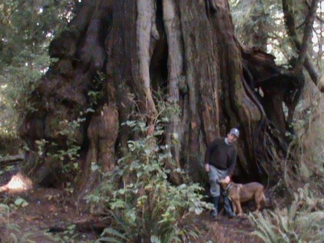 My dog and I at the (5.9 m dia.) Hanging Garden Tree on the Big Tree Trail.