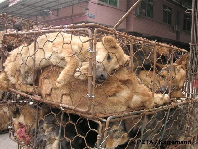 china.hunde im engen transportkäfig