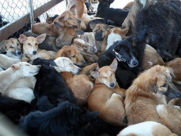 viele hunde zusammengefercht