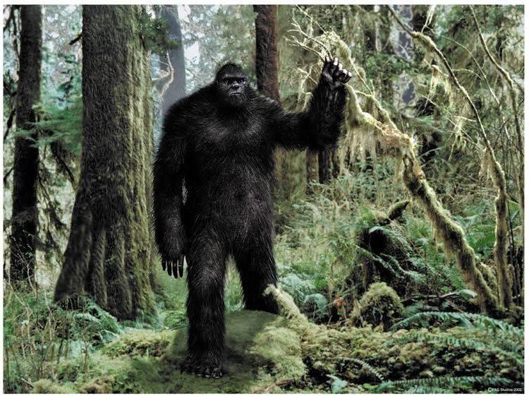 Santa Cruz Sasquatch Bigfoot