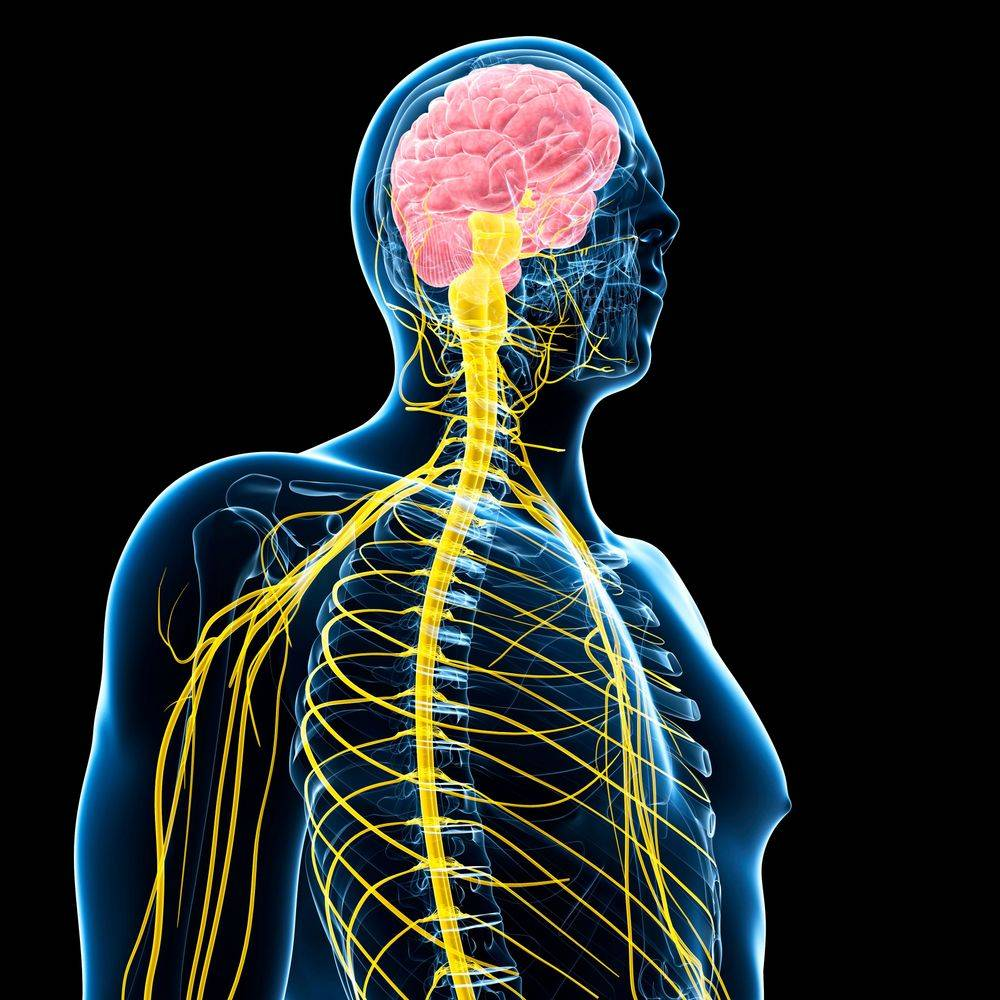 Acupuncture for Autoimmune Neurological Diseases NY,  Best Acupuncture Clinic Rochester NY, Syracuse NY, Binghamton NY,  Best Acupuncturist Rochester NY, Syracuse NY, Binghamton NY,  Best Acupuncture Rochester NY, Syracuse NY, Binghamton NY,